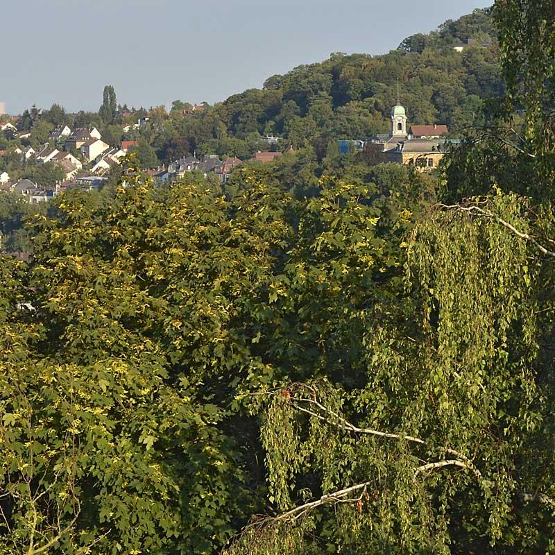 Blick nach Südost zum Stadtrand von Neustadt / Weinstr. - hier beginnt die Hauberallee (Ferienwohnung Uhuherz, Pfalz - Neustadt an der Weinstraße).