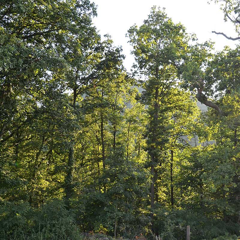 Direkt vor der Haustür ist der Pfälzerwald mit einem Netz von Waldwegen und Trails (Ferienwohnung Uhuherz, Pfalz - Neustadt an der Weinstraße).
